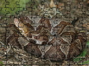 Click to Play Copperhead Jigsaw Puzzle